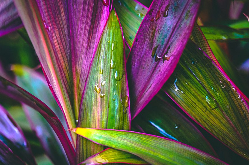 Photo of purple and green leaves